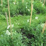 06-garden2-sm