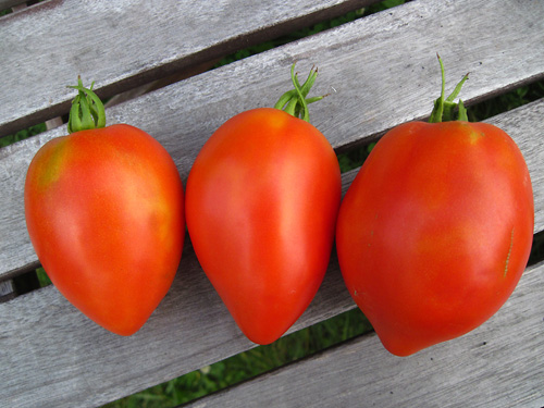Tomato 'Perestroika'