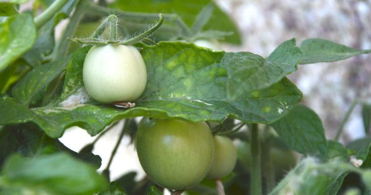 Seeds for Distribution