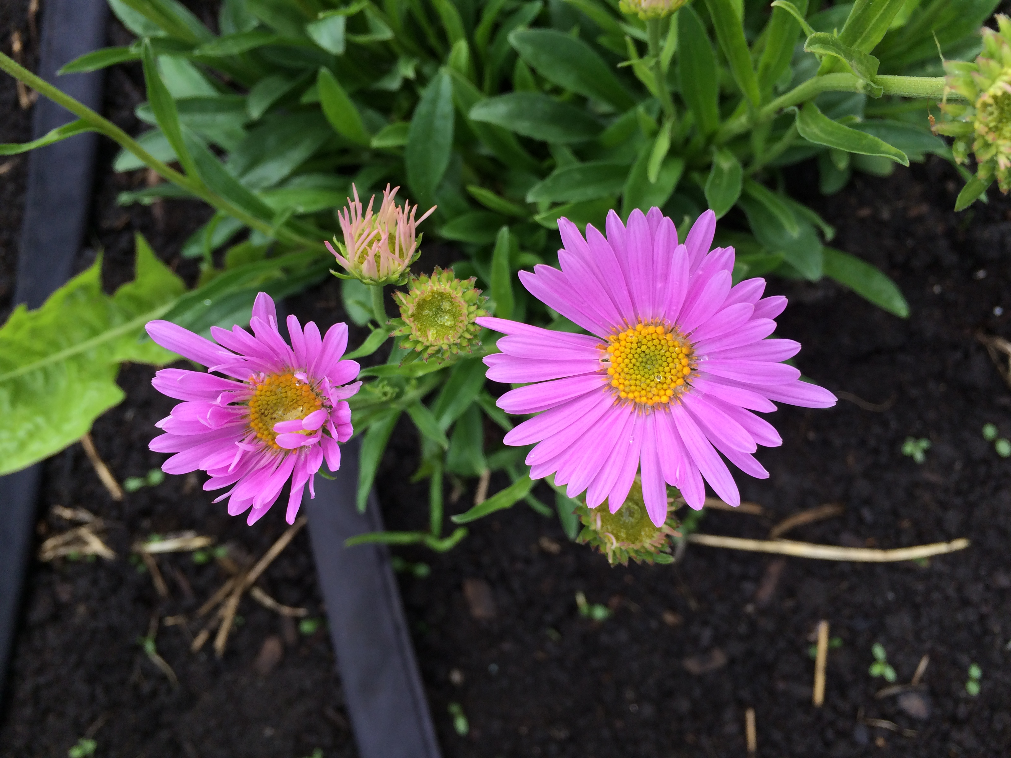 Garden Update: It's Summer, Baby